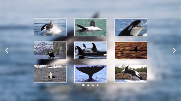 Customize your perfect Orca puzzle