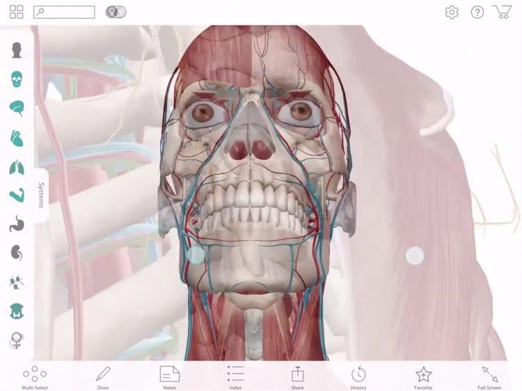 Atlas in anatomy
