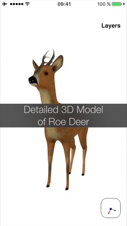 Deer Anatomy by Hans Vollbrecht