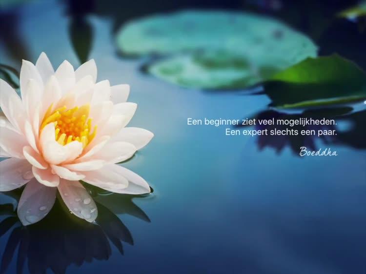 Citaten Boeddha : Wijsheid van boeddha by michel boezerooij