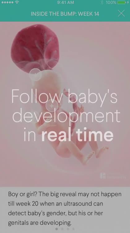 The Bump - Pregnancy Countdown